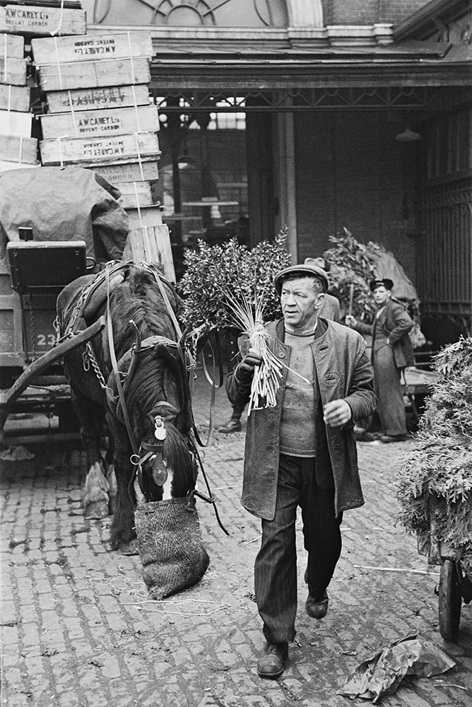 Nosebag And Nosegays from Bert Hardy fine art photography