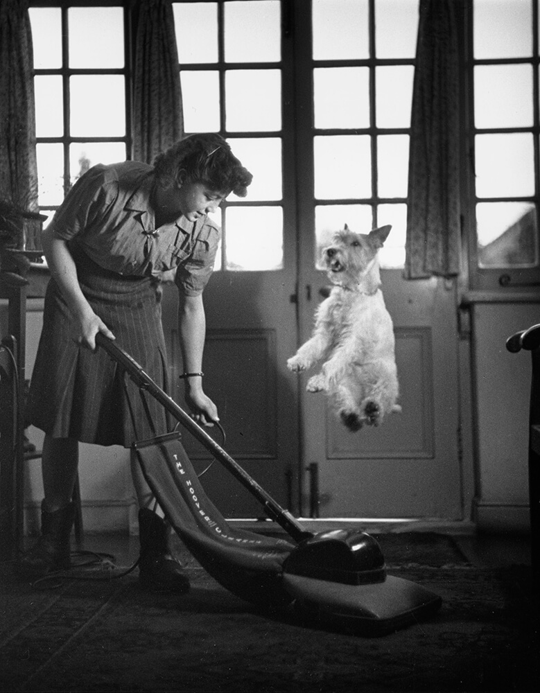 Vacuum Dog Jump from Picture Post fine art photography