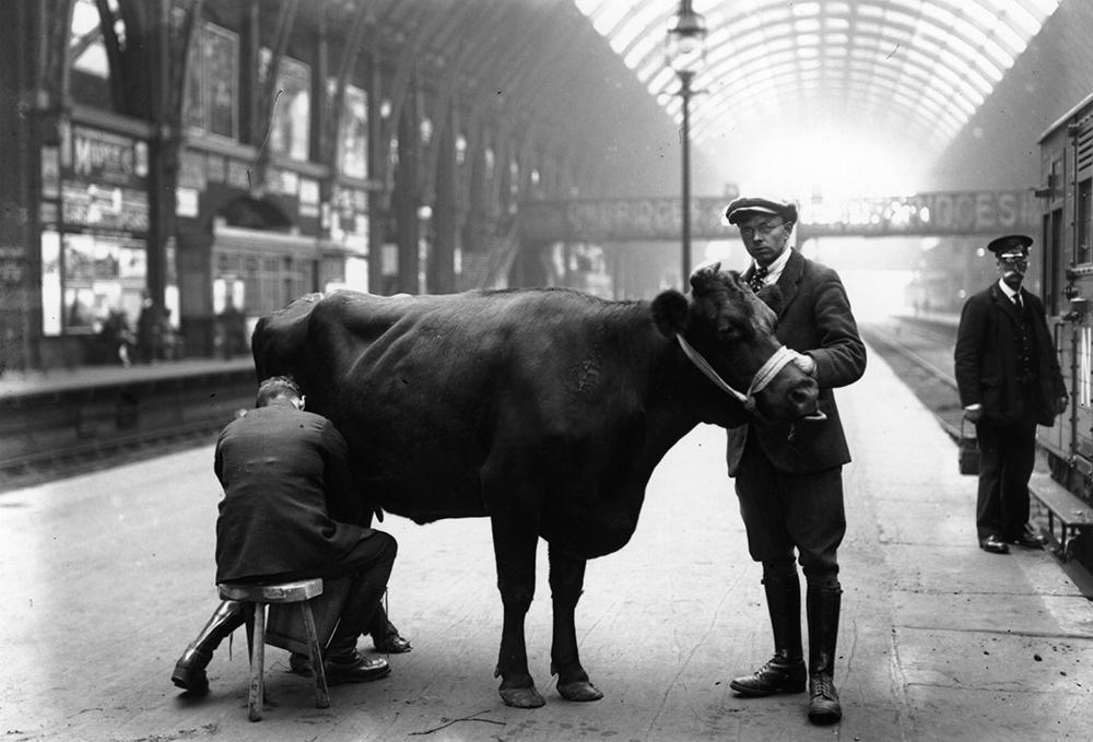 Platform Milking from London fine art photography
