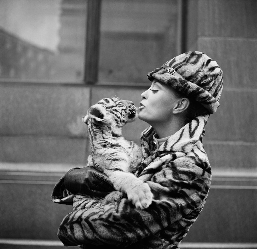 Tiger Lady from Fashion fine art photography